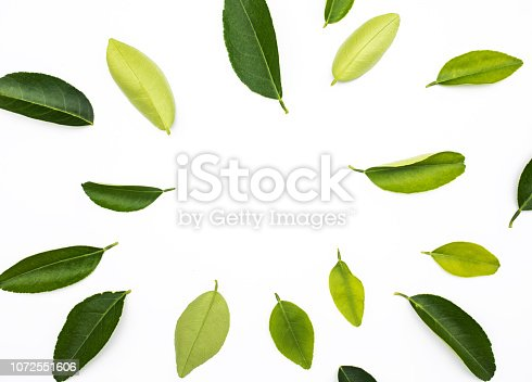 istock Top view of lemon,orange leaves pattern onwhite background 1072551606