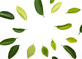 Top view of lemon,orange leaves pattern onwhite background.concepts ideas of fruit,vegetable.nature flat lay collections