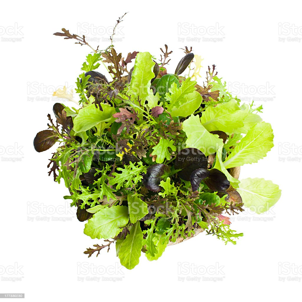 Top view of lettuce seedlings in white background stock photo