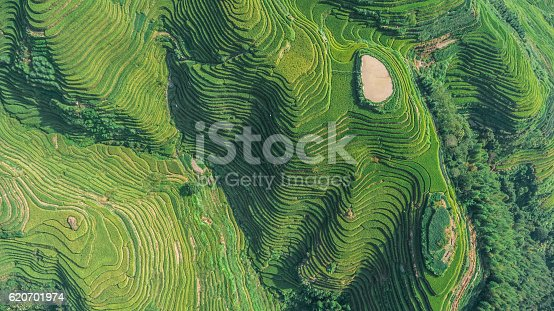 istock Top View of Longji Rice Terrace 620701974