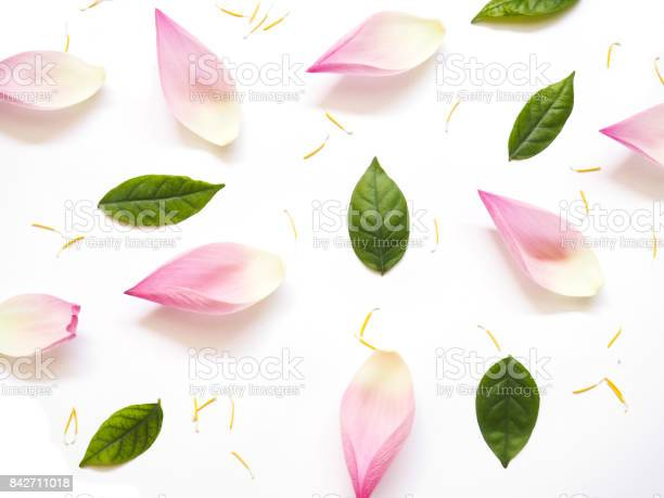 Top view of lotus petals with green leaves and yellow pollen on white picture id842711018?b=1&k=6&m=842711018&s=612x612&h=b03crh spxxfldclqeg60qmvjgprj3n0yrcg yocf3o=