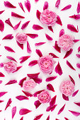 istock Top view of petals of pink peony flowers and pink english roses laying on white background. Concept of love 1222632997