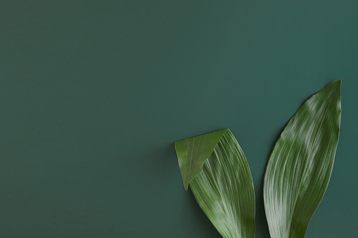 Top view of rabbit ears made of natural green leaves on bright background. Easter minimal concept, Flat lay and copy space.