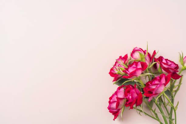 Blick auf die rote Rose für den Tag der Mutter & Valentine – Foto
