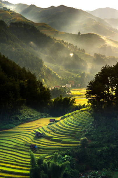 Top view of Rice terraced fields on Mu Cang Chai District, YenBai province, Northwest Vietnam stock photo
