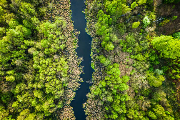 Top view of river and green forest, Poland stock photo