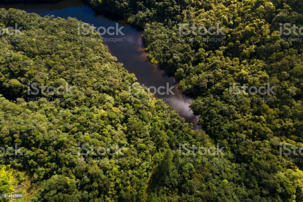 Top View of River in Rainforest stock photo