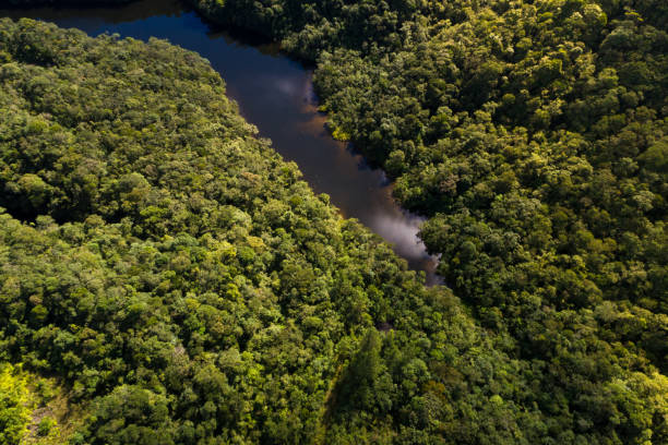 top view of river in rainforest - democratic republic of the congo stock photos and pictures