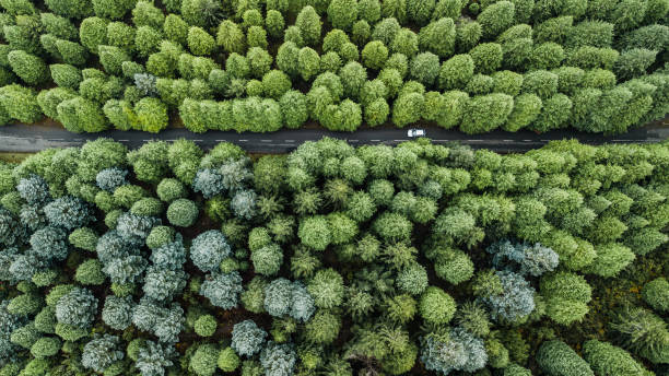 Top view of road through the green autumn forest. stock photo