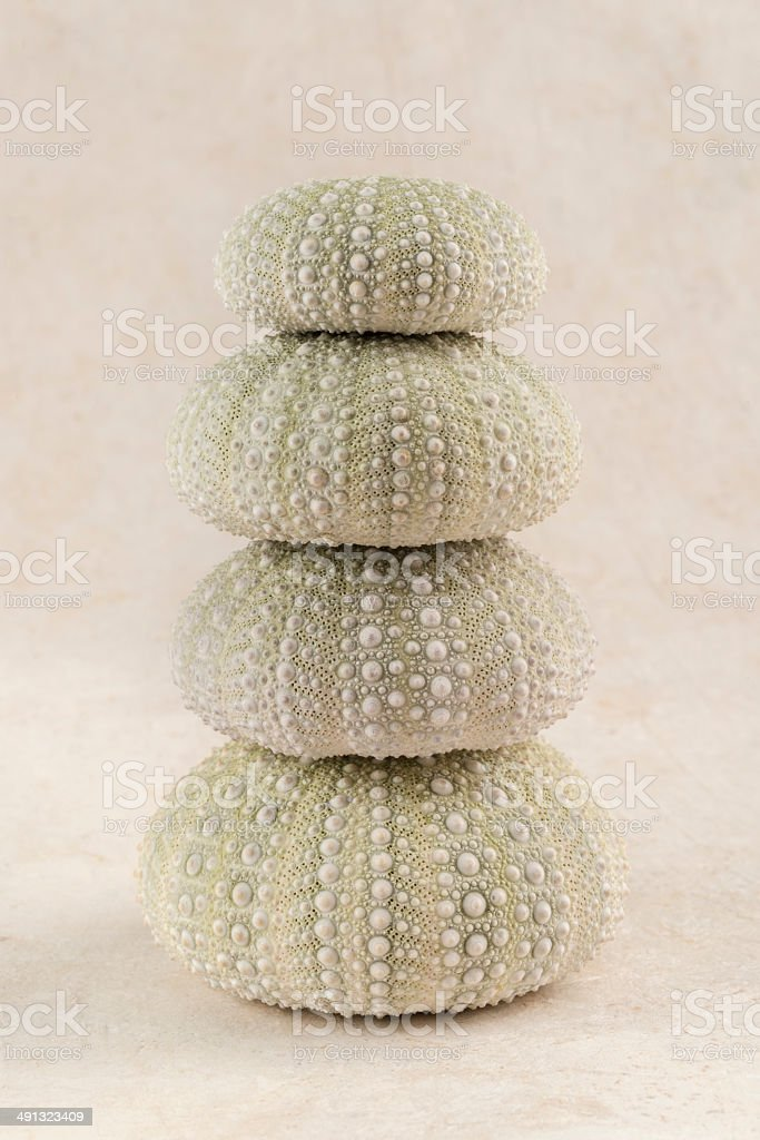 Top view of Sea Urchin pictorial composition stock photo