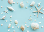 Top view of seashell set with copy space on color background.\nSummer, holiday,travel concept ideas