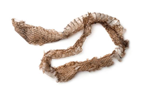 bovenaanzicht van slang vergieten huid - hair grow cyclus stockfoto's en -beelden