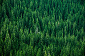 istock top view of the tops of trees 621142552