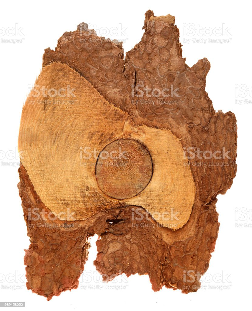 Top view of tree stump isolated on white background stock photo