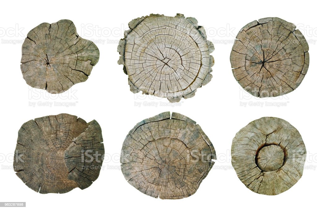 Top view of tree stumps isolated on white background stock photo