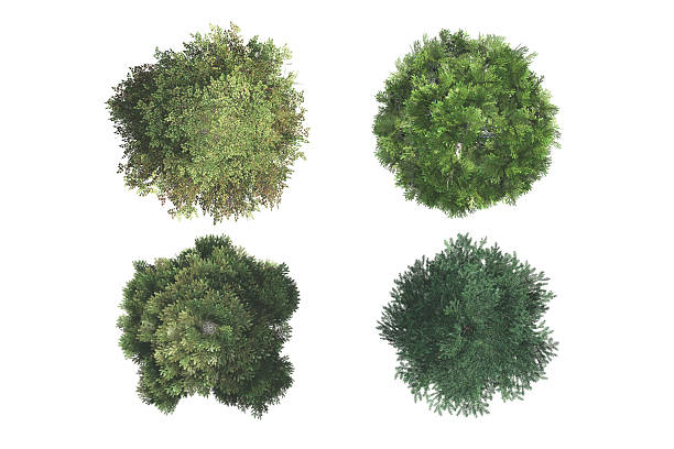 Top View of Trees stock photo