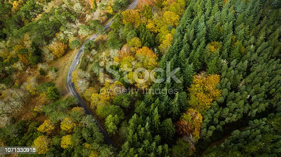 1061550162 istock photo Top view of turn road bend in autumn pine forest. 1071330918