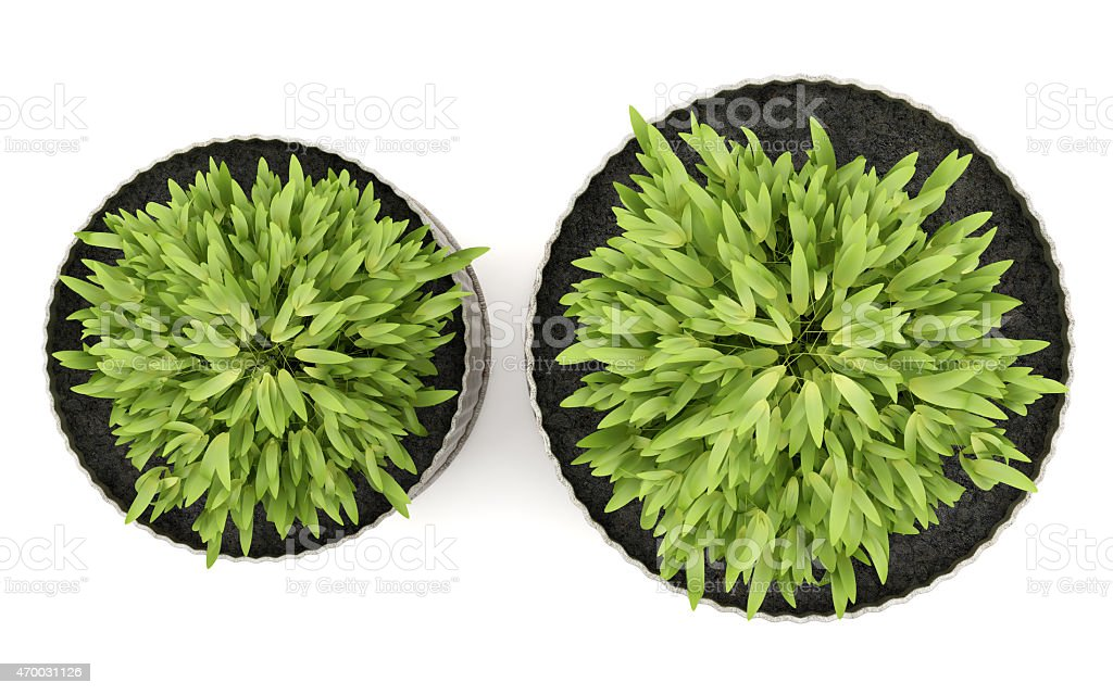 Top View Of Two Potted Houseplants Isolated On White Background Royalty Free Stock Photo