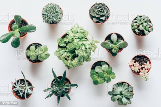 Photo of top view of various green succulents in pots on white