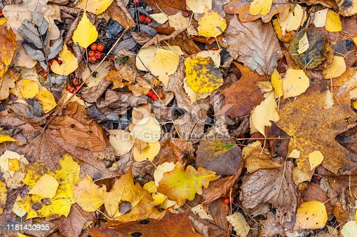 natural background - top view of wet various fallen leaves at meadow in city park in late fall
