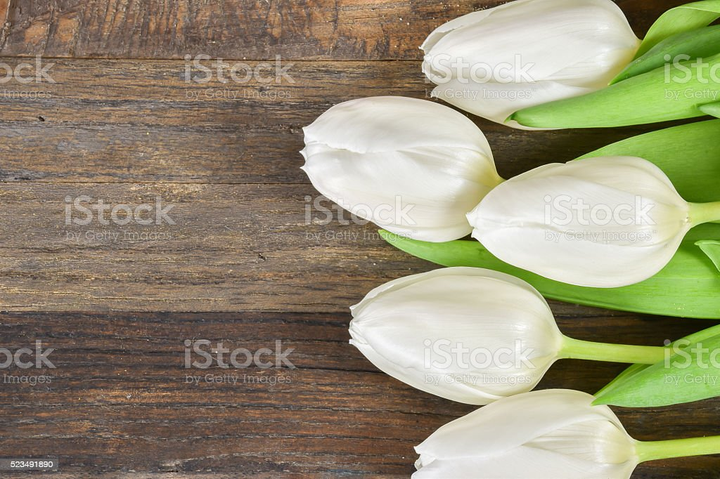 Top view of white tulips stock photo