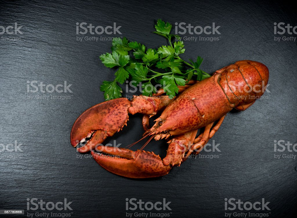top view of whole red lobster on slate stock photo