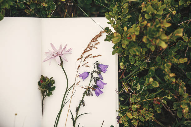 top view of wildflowers and gathered herbs on paper notebook on blueberry bushes in mountains. summer travel essentials in mountains. herbarium - folha de caderno imagens e fotografias de stock