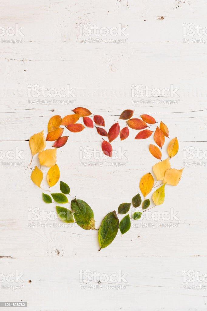 Draufsicht auf bunten Herbst Blätter auf weißem Hintergrund aus Holz. Gelb, rot, Orange und Grün lässt in Herzform. – Foto
