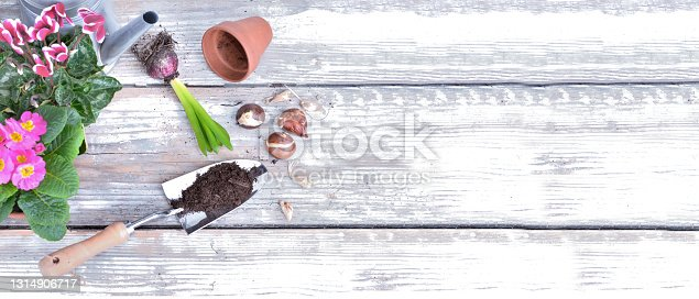 istock top view on flowers in pot and dirt in shovel on white wooden plank with copy space on the left 1314906717