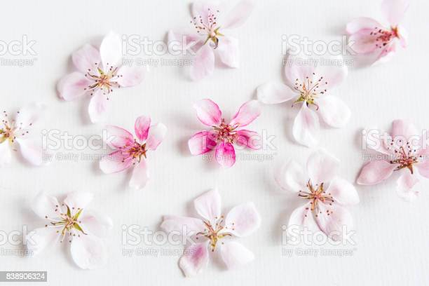 Top view on white background filling with sacura flowers concept of picture id838906324?b=1&k=6&m=838906324&s=612x612&h=gneucfyaroxx3sdsnpvwg4e hvf4srbgiz1diy9ib o=