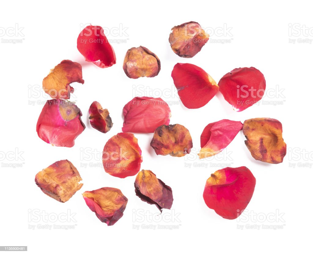 pétalas da vista superior de rosas desvanecidas no backgorund branco - foto de acervo