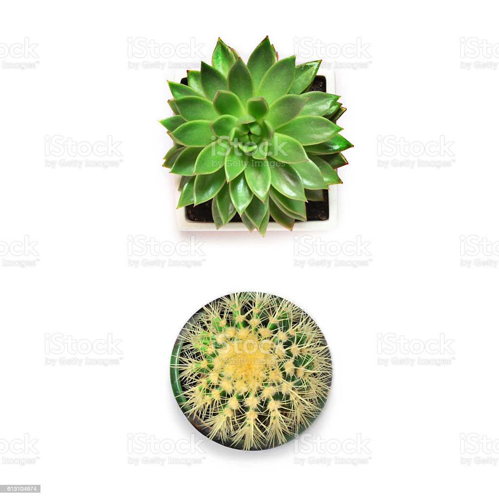 Top view. Succulent and cactus on white background. stock photo