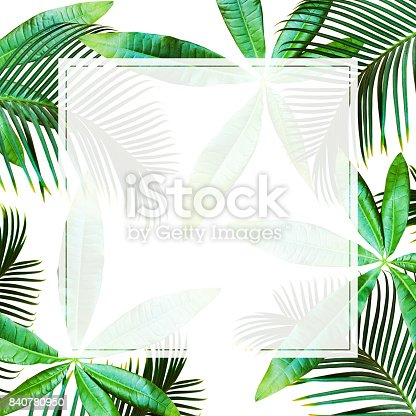 istock Top view Tropical palm leaves. Flat lay, White background 840780950