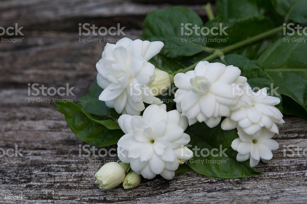 top view white jasmine stock photo