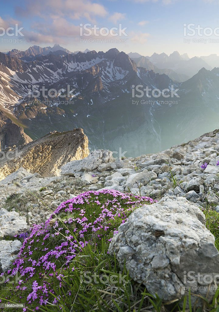 top view with flowers  from the lechtaler alps, tirol, austria stock photo