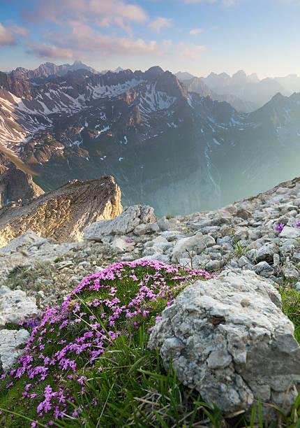 Ansicht von oben mit Blumen vom lechtaler Alpen, tirol, Österreich – Foto