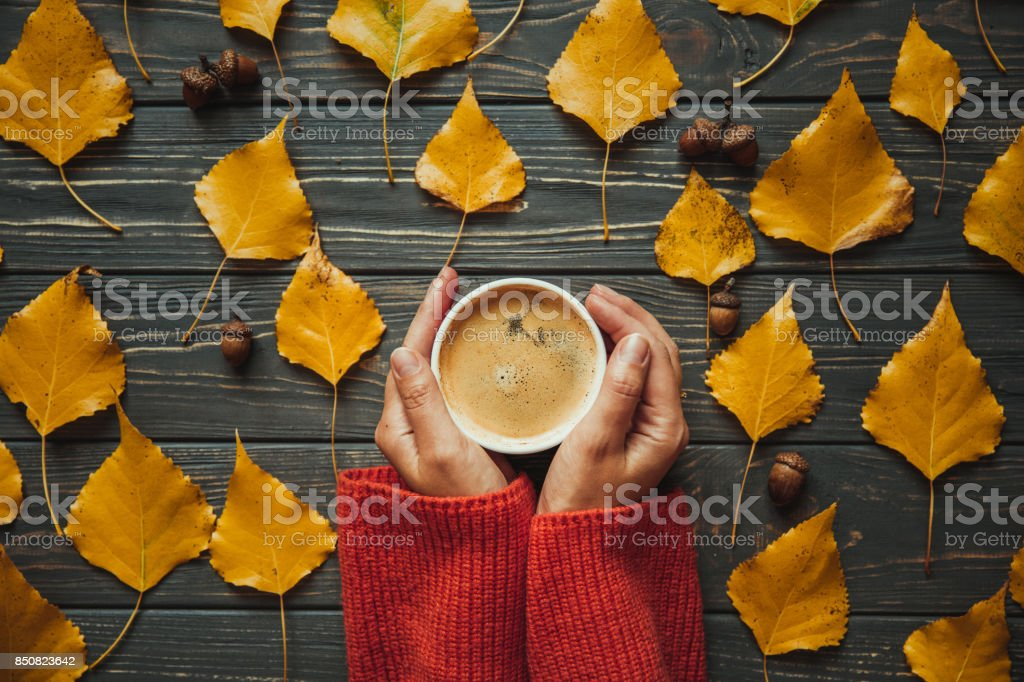 Top view woman on warm sweater holding hands cup cappuccino on  wooden table. Autumn leaves and acorn stock photo