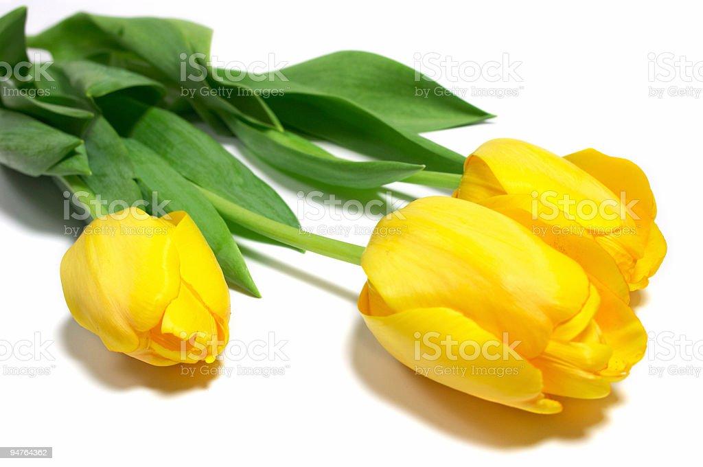 topaz tulips #2 royalty-free stock photo