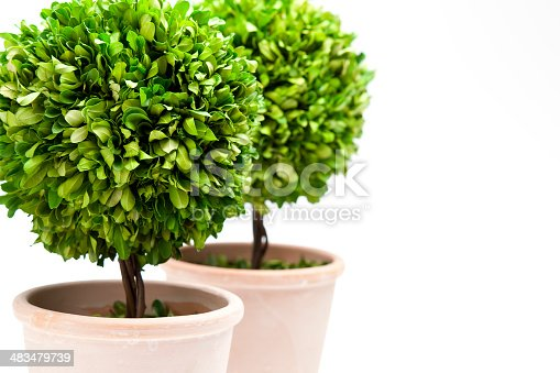 Selective focus on decorative topiaries. A nice background for spring and gardening themes.