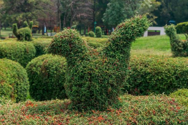 Topiary bird shaped bush stock photo