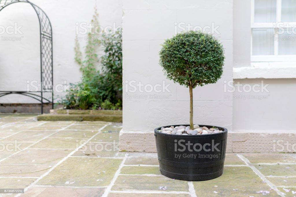 Boom In Pot Tuin.Topiary Tuin Boom In Een Pot Met Decoratieve Pebble Base Staan Op De