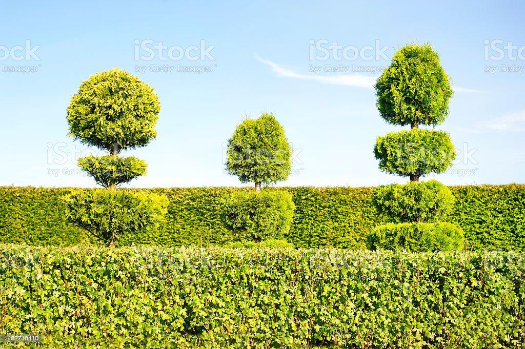 Art topiaire green arbres et de haies sur fond d'ornement dans le jardin. - Photo