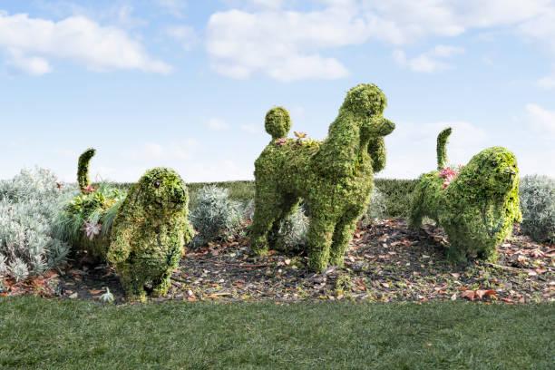 topiaire groupe de chiens sur l'herbe. - buis photos et images de collection