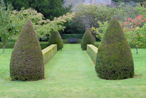 Topiary Hedges Autumnal Garden