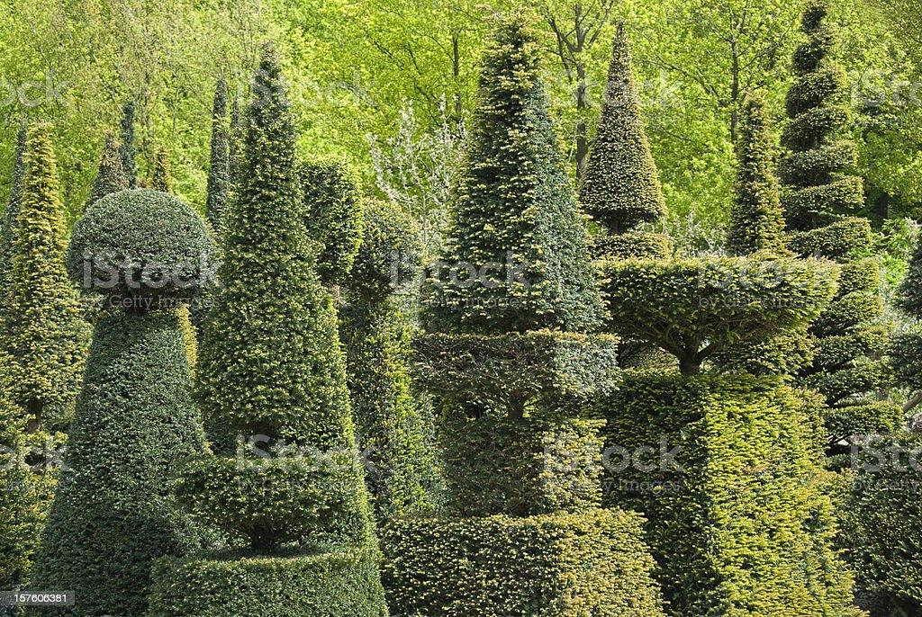 Topiary stock photo