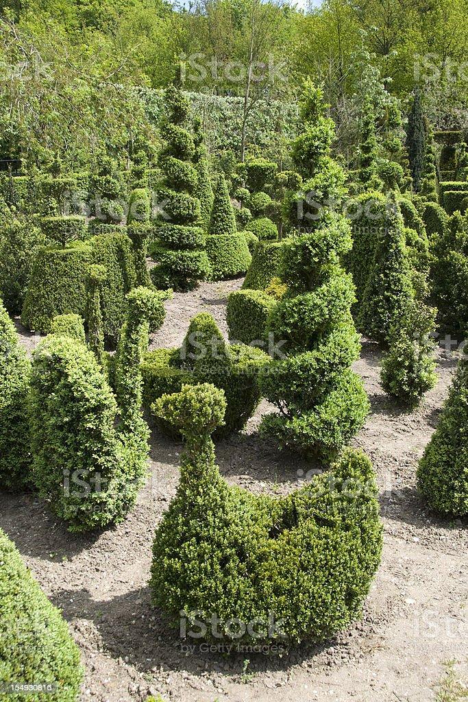 Topiary Shapes stock photo