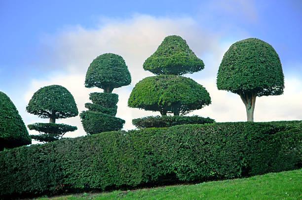 art topiaire arbres - buis photos et images de collection