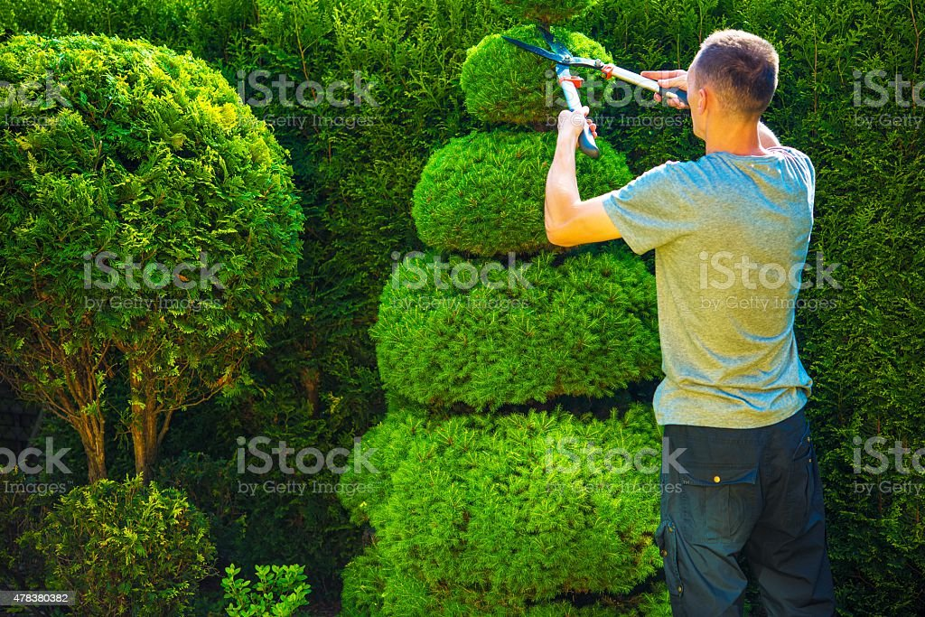 Topiary Trimming Plants stock photo