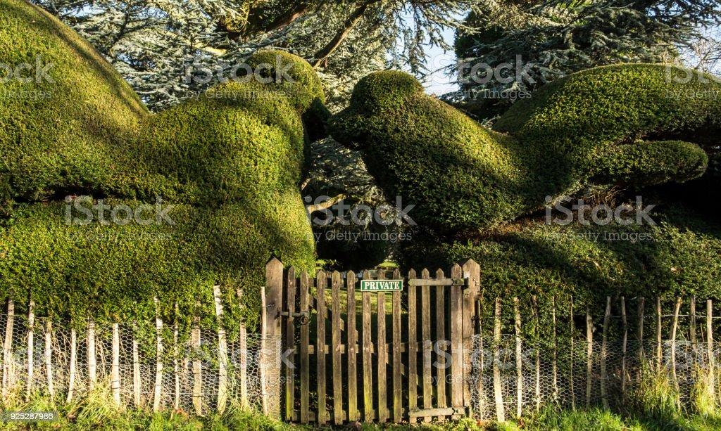 Topiary yew hedge stock photo