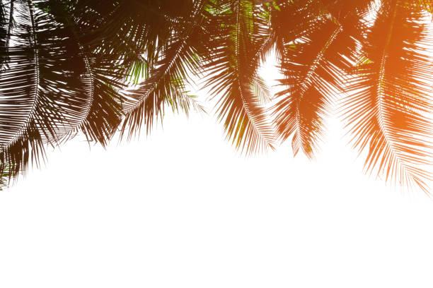topische kokospalme blätter - horizontal gestreiften vorhängen stock-fotos und bilder